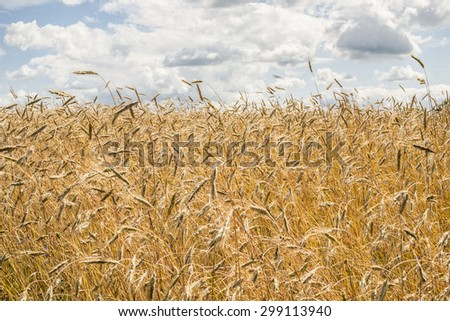 HDR background with field and the sky with clouds