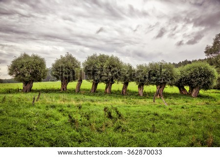 HDR landscape with a row of willow trees