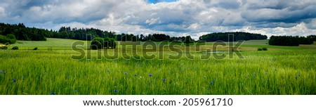 HDR landscape with wheat field, forests and blue sky in summer time - stock photo