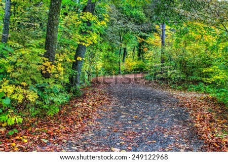 HDR of a forest path during fall colors in soft focus. - stock photo