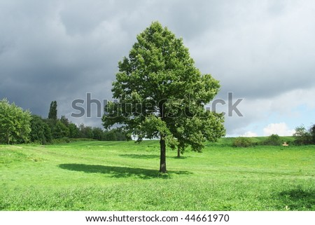 He is tree staying alone alone on an autumn field.