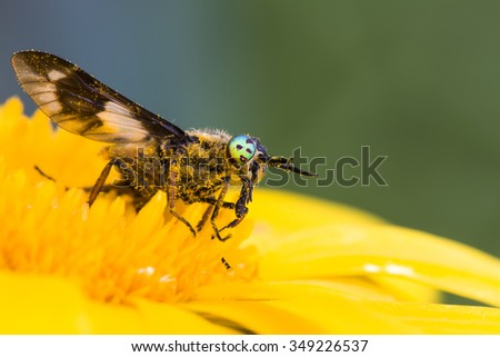 he sits on a yellow flower waiting for prey