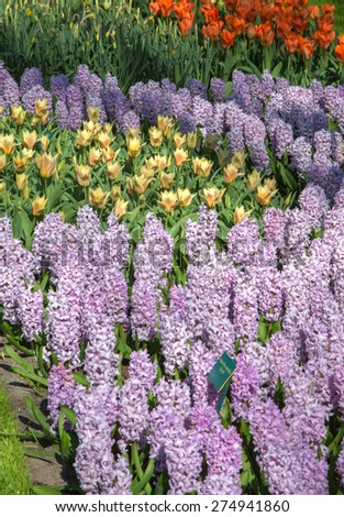 he tulip river in the royal park Keukenhof. - stock photo