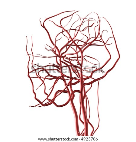 Head and Brain Arteries - stock photo
