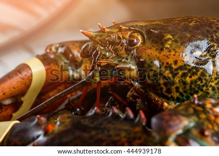 Head and claw of lobster. Tied claw of raw lobster. Strong shell with spikes. Creature caught in the sea.