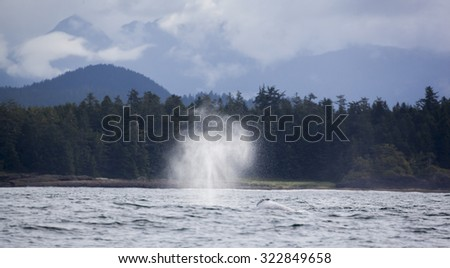 Head and spray of a gray whale before coast of Vancouver Island in the Pacific Ocean, Canada - stock photo