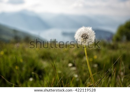 head isolated in the meadow - stock photo