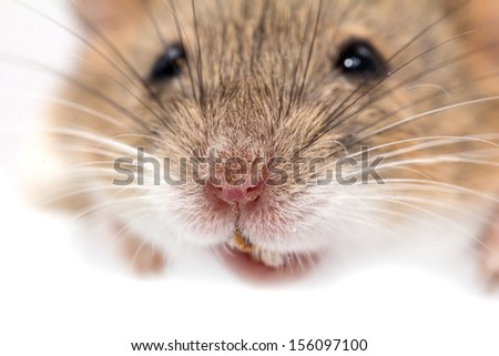 head mouse. macro - stock photo