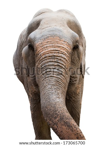 head of a Asian elephant Isolated on white background - stock photo