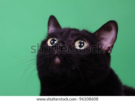 Head of a black cat with the long moustaches, looking upwards, on a green background