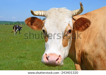 Head of a cow against a pasture