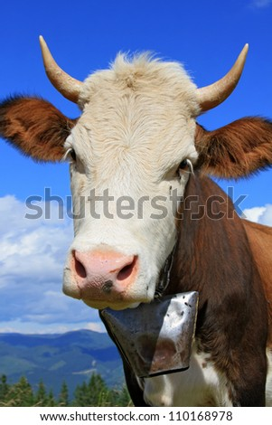 Head of a cow against mountains