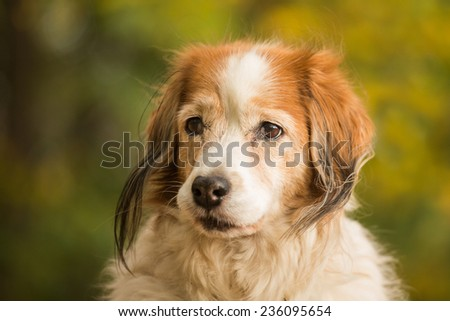 Head of a dog - stock photo