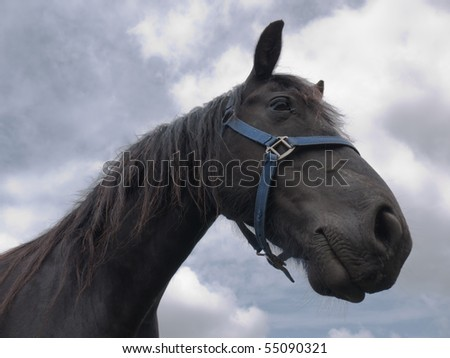 Head of a Friesian horse against the sky - stock photo