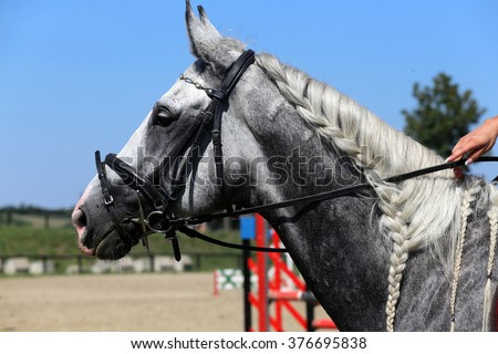 Head of a  jumping horse in dressage training - stock photo