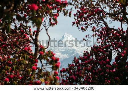 Head of a mountain through the trees - stock photo