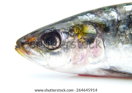 Head of a sardine on a white background - stock photo
