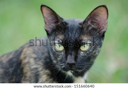 Head of a sitting cat,with alert look. - stock photo