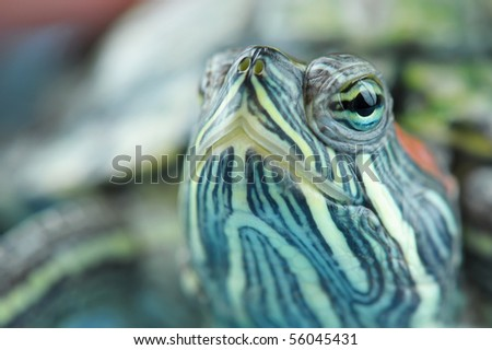 Head of a turtle close-up