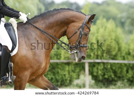 Head of a young dressage horse with unknown rider in action - stock photo