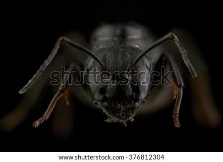 Head of ant. Extreme macro - stock photo