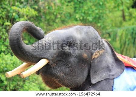 head of baby Elephant thailand - stock photo