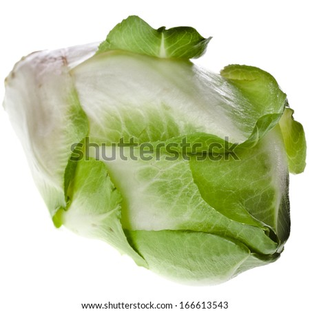 head of belgian endive chicory isolated on a white background