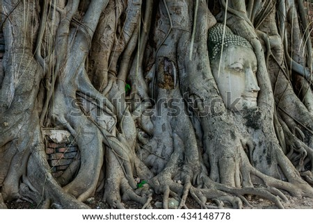Head of Buddha in root at Wat Mahathat in Thailand