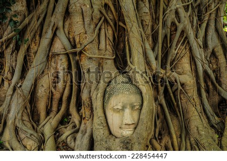 Head of Buddha in The Tree Roots , Ayutthaya, Thailand