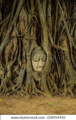 Head of Buddha in The Tree Roots , Ayutthaya, Thailand - stock photo