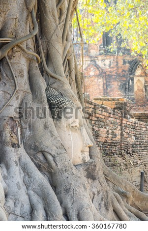 Head of Buddha statue in the tree roots at Wat Mahathat temple, Ayutthaya, Thailand - stock photo