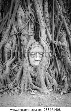 Head of Buddha statue in the tree roots at Wat Mahathat temple, Ayutthaya, Thailand. Black and White Vertical - stock photo