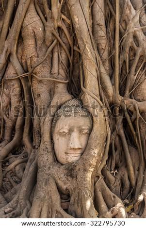 Head of Buddha statue outgrown by tree roots at Wat Phra Mahathat, Ayutthaya, Thailand - stock photo