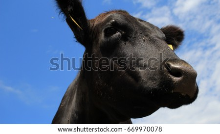 Calf Pens Stock Images Royalty Free Images Amp Vectors
