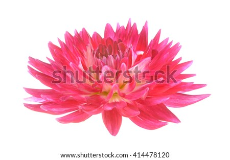 head of dahlia flower isolated on white background