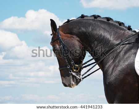 Head of dressage horse on sky background