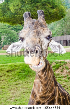 Head of giraffe, Thailand - stock photo