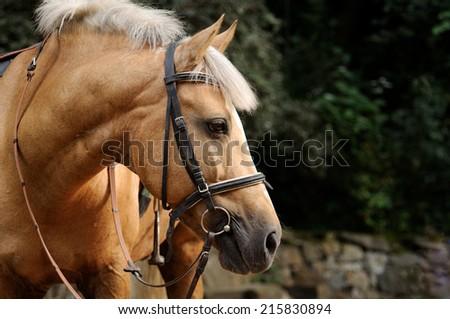 Head of horse close up. - stock photo