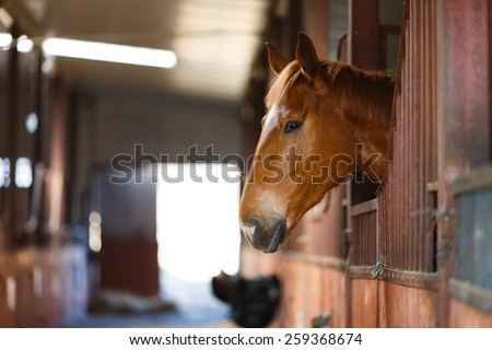 Head of horse looking over the stable doors - stock photo