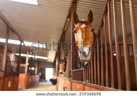 Head of horse looking over the stable doors & Horse Stable Door Stock Images Royalty-Free Images u0026 Vectors ... pezcame.com