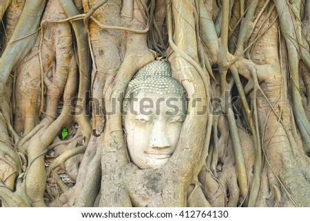 Head of image of Buddha inside rain tree at Ayutthaya, Thailand