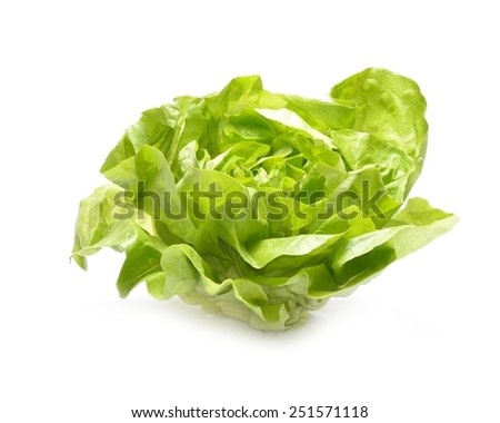 Head of lettuce isolated on white background - stock photo