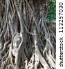 Head of Sandstone Buddha in The Tree Roots at Wat Mahathat, Ayutthaya, Thailand - stock photo
