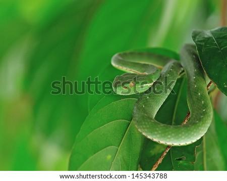 Head of snake - stock photo
