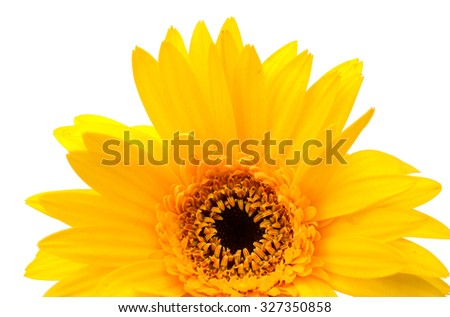 Head of sunflower isolated on white  - stock photo