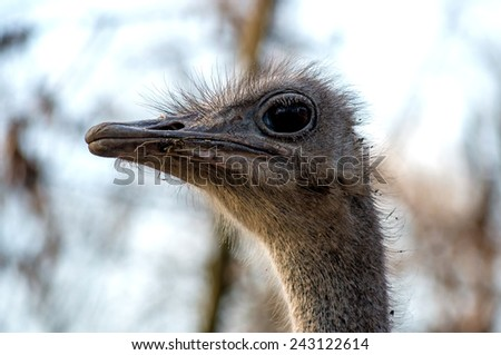 head of the bird ostrich in zoo of the Bulgaria close-up