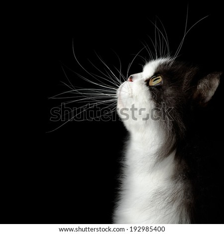 head of young cat on black background - stock photo
