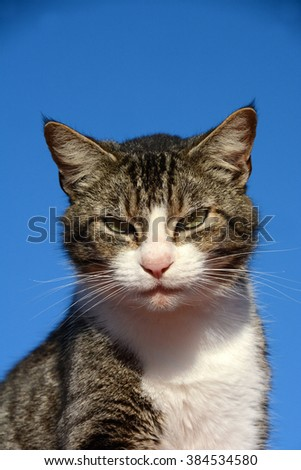 Head portrait of a domestic cat with alert facial expression in front of blue sky background.