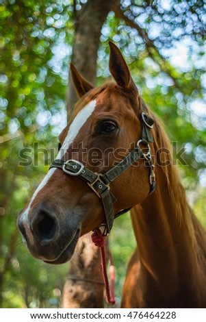 Head shot of a chestnut horse. Portrait of nice brown bay horse