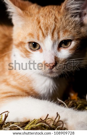 Head shot of a orange and white striped tabby cat laying on carpet
